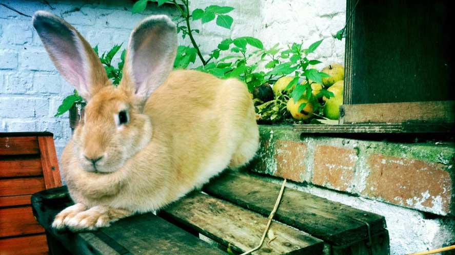 Elio, le lapin de The Peas, l'épicerie à l'origine de färm.